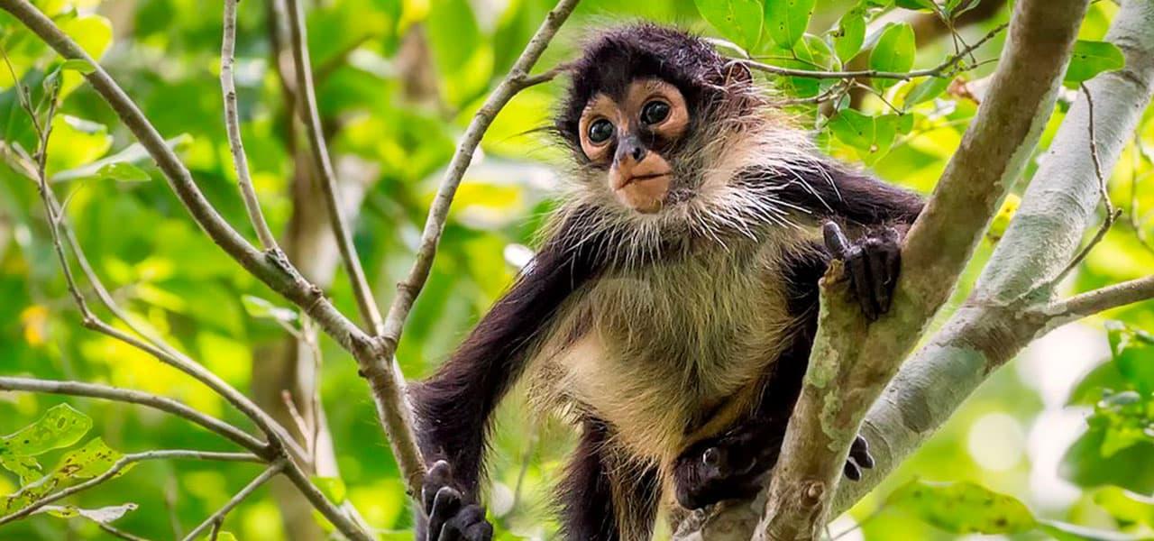 mayan-and-monkey-adenture-tulum-colibri-hotel-1